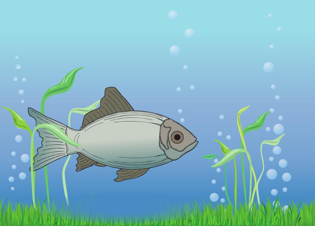 Czy warto jeść ryby? FitMed