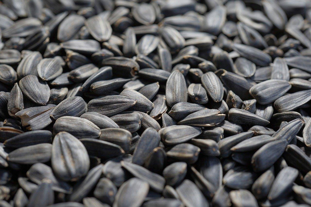 Nasiona słonecznika wzmocnią skórę